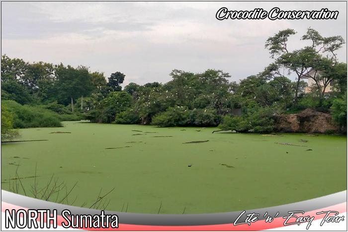 Asam Kumbang Crocodile Conservation Medan