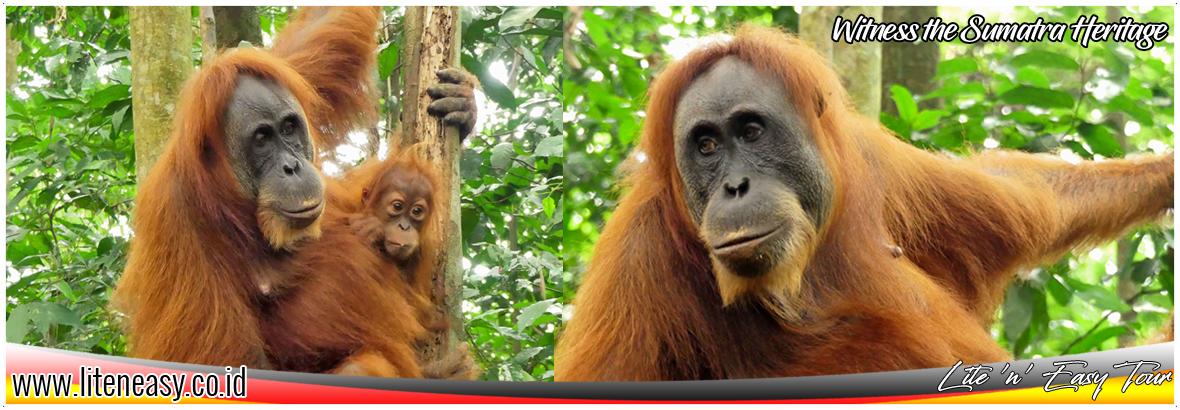 Sumatra Holidays - Travel Destinations Indonesia
