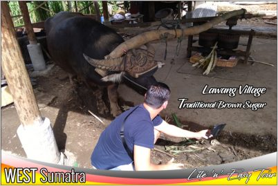 Lawang Village West Sumatra Traditional Brown Sugar Cane